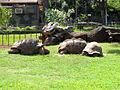 Aldabra Tortoise.jpg