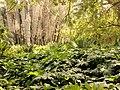 Algeria's Plants.JPG