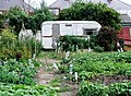 Allotment Gardens, Withernsea - geograph.org.uk - 215568.jpg