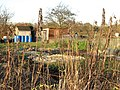 Allotment gardens in early December - geograph.org.uk - 1605834.jpg