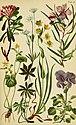 Alpenflora; die verbreitetsten Alpenpflanzen von Bayern, Österreich und der Schweiz (1922) (17486834104).jpg
