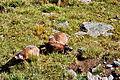 Alpy Landscape wikiskaner 14.jpg