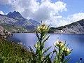 Am Lago Scuro.jpg