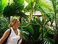 Amazona auropalliata -Jurong Bird Park-8a.jpg