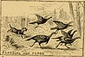 American game bird shooting (1882) (14568883410).jpg