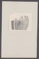 Ammonites spec. - - Print - Iconographia Zoologica - Special Collections University of Amsterdam - UBAINV0274 091 01 0009.tif