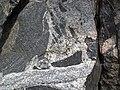 Amphibolite inclusions in Giants Range Batholith (Neoarchean, 2.674-2.682 Ga; Confusion Hill roadcut, just north of Virginia, Minnesota, USA) 3 (23558363252).jpg