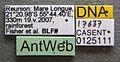 Anoplolepis gracilipes casent0125111 label 1.jpg