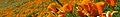 Antelope Valley banner.jpg