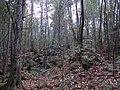 Aokigahara Forest (10863170736).jpg