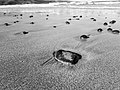 Apollo Bay (AU), Beach -- 2019 -- 171508 (bw).jpg