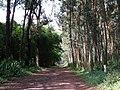Arboretum Rwanda 4.jpg