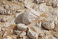AregFossils2.jpg