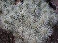 Arizona Cactus Garden 049.JPG