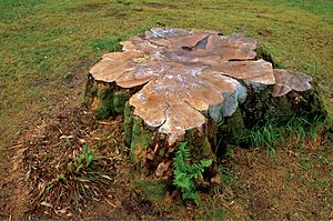 Tree stump at Armadale Castle.