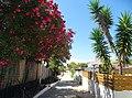 Armona Island (Portugal) (48777419212).jpg
