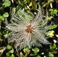 Arosa - plant 3.jpg