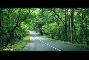 Athirappilly - A road through the foliage of Athirapally forests