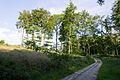 Augustdorf - 2014-06-13 - LIP-066 - Lönspfad (12).jpg