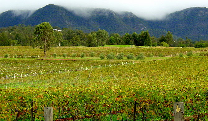 Vineyards in the Australian wine region of the...
