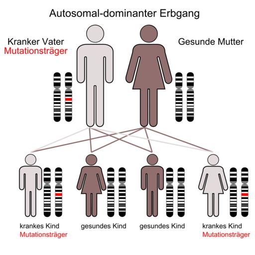 Autosomal-dominante Vererbung