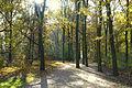 Autumn - Großer Tiergarten, Berlin, Germany - DSC09462.JPG