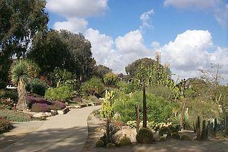 Balboa Park Gardens - Desert Cactus Garden, Balboa Park