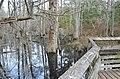 Bald Cypress Trail First Landing State Park-boardwalk railing (33208560655).jpg