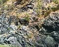 Bamble Aaby-Vinjekilen E18 IMG 5234 geology.JPG