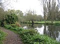 Banks of The Cam - geograph.org.uk - 1049500.jpg