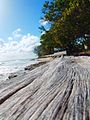 Barbados beaches 2007 000.jpg