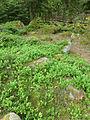 Barbey-Seroux-Myrtillers.jpg