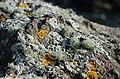 Beach closeups fungi and lichen (15974473683).jpg
