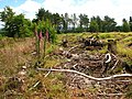 Beacon Hill Heathland Restoration Project - geograph.org.uk - 481202.jpg