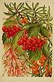 Beautiful flowering trees and shrubs for British and Irish gardens (1903) (20350241362).jpg