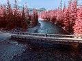 Beautiful red trees (Unsplash).jpg