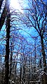 Beautiful view of winter forest in Iran - panoramio.jpg