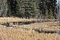 Beaver ponds Kananaskis Alberta Canada (30781313951).jpg