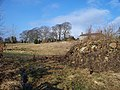 Beech trees - geograph.org.uk - 1713163.jpg
