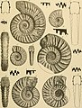 Beiträge zur Paläontologie und Geologie Österreich-Ungarns und des Orients - Mitteilungen des Geologischen und Paläontologischen Institutes der Universität Wien (1896) (20337400726).jpg