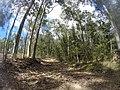 Benandarah NSW 2536, Australia - panoramio (70).jpg