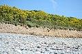 Beniguet erosion north coast.jpg