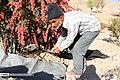 Berberis 13960722 02.jpg