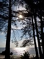 Berlindung di Balik Pohon Tepi Pantai Romodong - panoramio.jpg