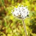 Beutiful flower.jpg
