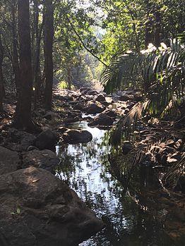 Bhagwan Mahaveer Sanctuary and Mollem National Park- Dudhsagar falls.jpg