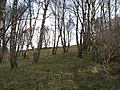 Birch woods, Strath Tummel - geograph.org.uk - 376062.jpg