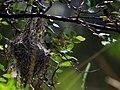 Bird nest1.jpg