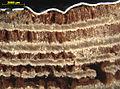 Blaettlingsbefall-an-querschnitt-fensterprofil-1.jpg