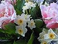 Blumenstrauß mit Tulpen und Narzissen 2.JPG